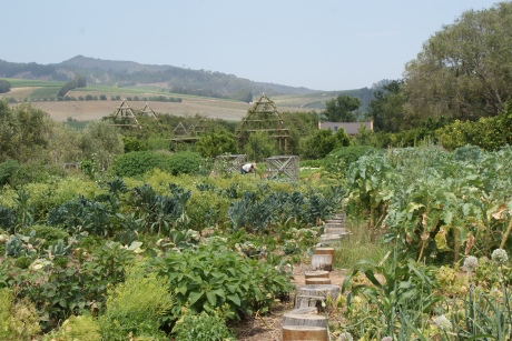 One little part of the garden at Babylonstoren