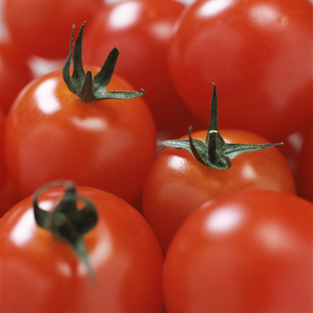high_tomatoes-sml[1]
