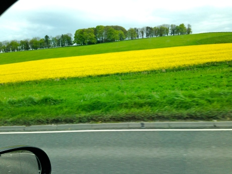 Stripes of Rapeseed gold - it makes me smile