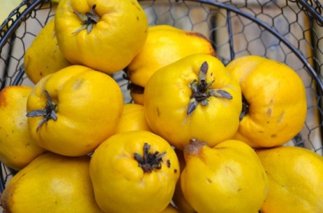 quince-real-natural-remedy-600x397